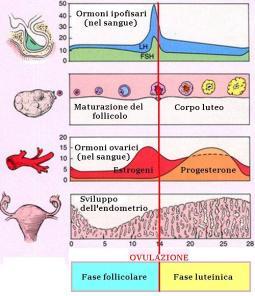 ciclo-mestruale